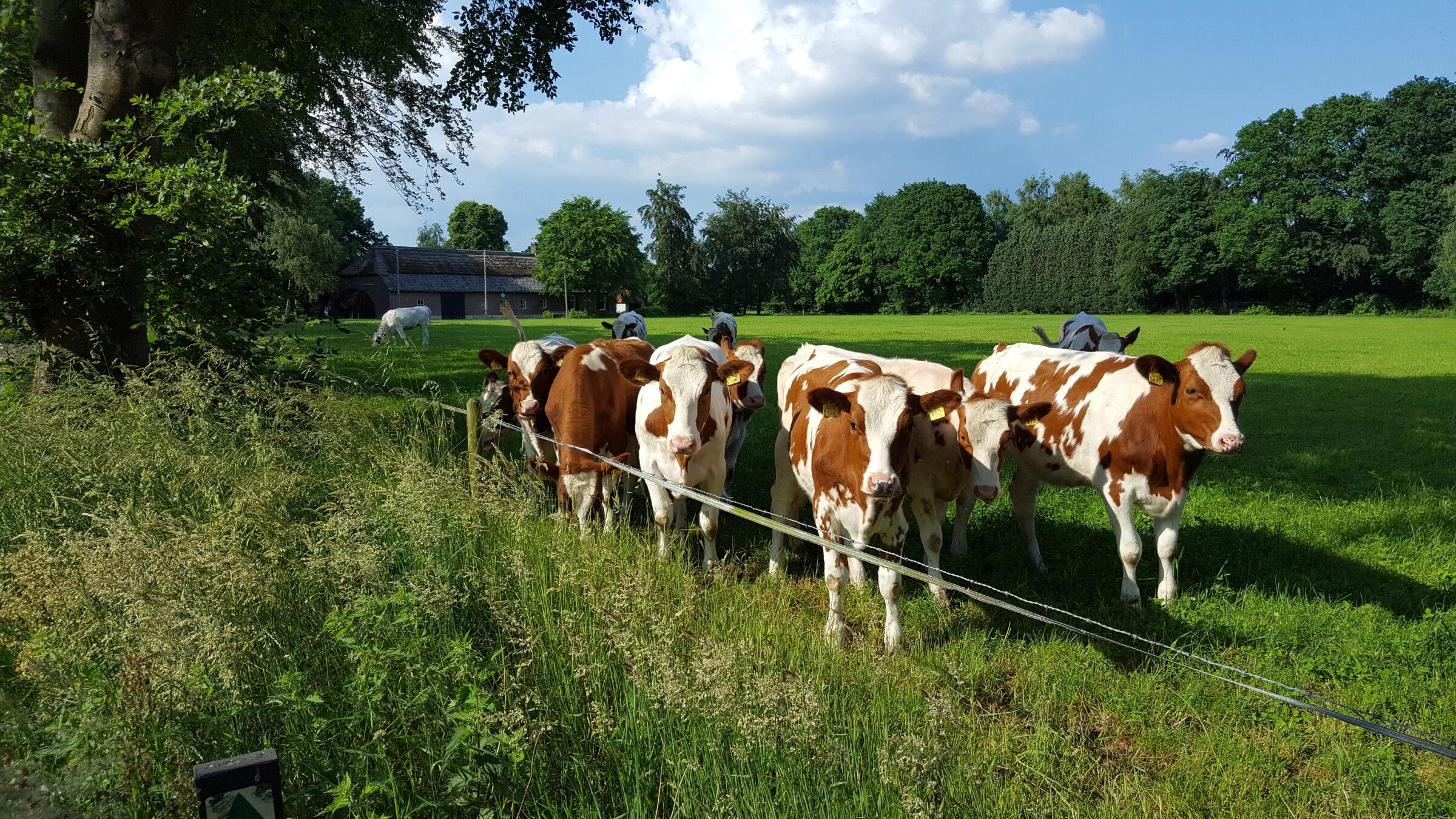 De Brabantse Biodiversiteitsmonitor Melkveehouderij draagt bij aan de kwaliteit van de omgeving